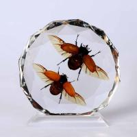 Buy cheap Insect Amber Desktop Decoration (BC022) product