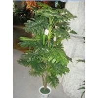 Buy cheap Lacy tree philodendron from wholesalers