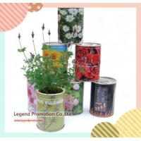Buy cheap Flower and magic bean in can growing message idea gift in one euro shop from wholesalers