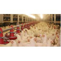 Buy cheap Durable Full Set Poultry Farm Equipment from China from wholesalers