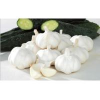Buy cheap pure white garlic from wholesalers