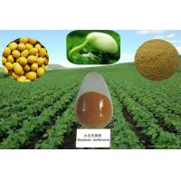 Buy cheap Immune & anti-fatigue Soy Bean Extract / Immunity boosters vitamins plant extract soy isof from wholesalers