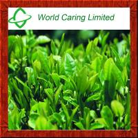Buy cheap Weight Loss Ingredient Green Tea extract Tea polyphenol 50%-98% HPLC from wholesalers