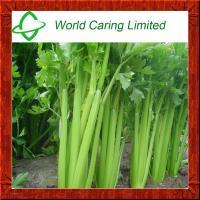Buy cheap High Purity herbal ingredient Apigenin Powder 98% CAS No: 520-36-5 product