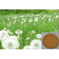 Buy cheap Dandelion Extract for  liver diseases,Brown Powder,Herbal Extract/Plant Extract from wholesalers