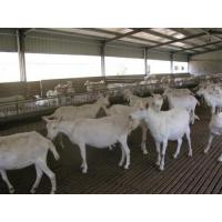 Buy cheap H Beams Poultry Farm Structure Galvanized Water Gutter Drainage System from wholesalers