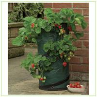 Buy cheap Strawberries grow bags with customized logo  30x55cm garden planter from wholesalers