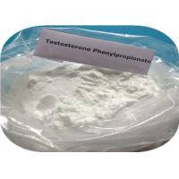 Fat Burning Hormone For Muscle Building , CAS 1255-49-8 Testosterone Propionate Powder