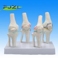 Buy cheap Knee Joints Synthesis Model product