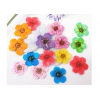 Buy cheap Narcissus Tiny Dried Flowers , Small Pressed FlowersPlant Specimen For Nail Decoration from wholesalers