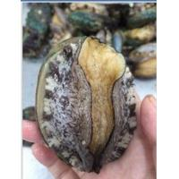 Buy cheap abalone price wholesale frozen abalone with shell from wholesalers
