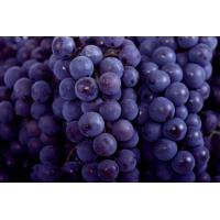 Buy cheap Chinese Globe Juicy Fresh Red Seedless Grapes  9KG / Foam ctns from wholesalers
