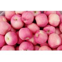 Buy cheap Delicious Shandong Yantai Organic Red Fuji Apple 7CM Juicy With Thin Skin from wholesalers