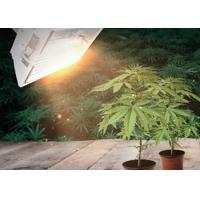 Buy cheap High Pressure Sodium HID Grow Lights A350 ,  DE Grow Light For Large Scale Greenhouse product
