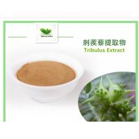 Buy cheap Tribulus extract,Tribulus Terrestris Extract,Saponins from wholesalers