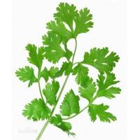 Buy cheap Hot sales Bulk Petroselinum Crispum Extract/Parsley Extract powder 10:1 from wholesalers