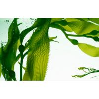 Buy cheap 100% Seaweed Extract With Potassium Organic Fertilizer, high potassium seaweed extract(black fine powder) from wholesalers
