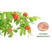 Buy cheap cold pressed rosehip oil,natural rosehip oil,organic rosehip skincare,rose hip oils from wholesalers