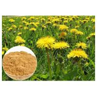 Dandelion Root Herbal Plant Extract Brown Color Powder 80 Mesh For Digestive Aid