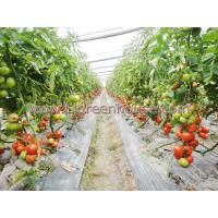 Buy cheap Agriculture Greenhouse for tomato from wholesalers