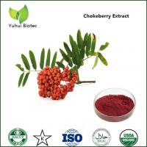 China aronia melanocarpa extract,aronia melanocarpa,chokeberry p.e.,choke berry extract on sale