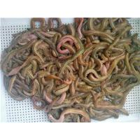 Buy cheap marine worm, seaworm, marine worm bait, marine worm lure from wholesalers