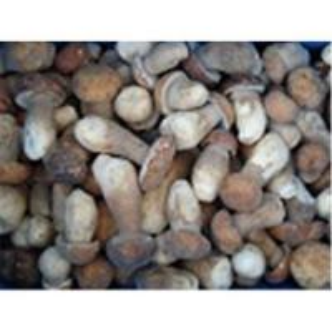 China Frozen boletus edulis,wild mushrooms on sale