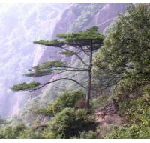 Buy cheap Pine Bark P. E. from wholesalers