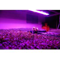 Buy cheap 2012 Detachable Power LED Grow Light for Hydroponics from wholesalers