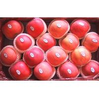 Buy cheap Yantai Delicious Thick Fresh Fuji Apple from wholesalers