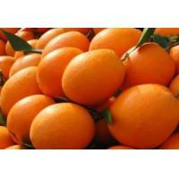 Buy cheap Fresh Navel Oranges from wholesalers