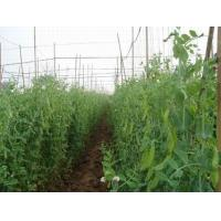 Buy cheap Peapods from wholesalers