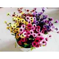 Buy cheap 72 pcs Autumn Chrysanthemum from wholesalers