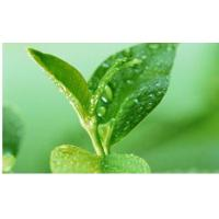 Buy cheap Green Tea Polyphenols product