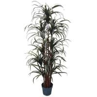 Buy cheap 6'YUCCA TREE from wholesalers