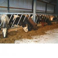 Buy cheap Cattle Feeding from wholesalers