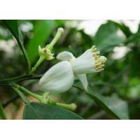 Buy cheap Citrus Annua L. Line Synephrine from wholesalers