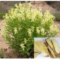 Buy cheap Astragalus membranaceus from wholesalers