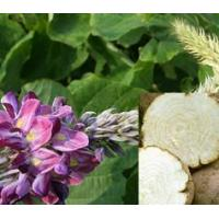 Buy cheap Pueraria Mirifica from wholesalers