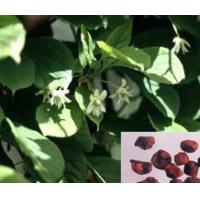 Buy cheap Schisandra chinensis (Turcz.) Baill. from wholesalers