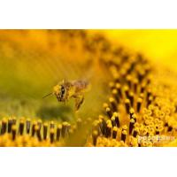 Buy cheap Aboutbeepollen product
