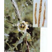 Buy cheap Makes up the empty medicine NAME:Radix Codonopsis Piosulae from wholesalers