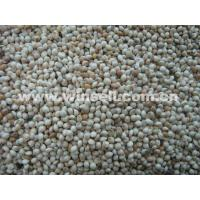 Buy cheap Cereals, Seeds, OilWhite broomcorn millet from wholesalers