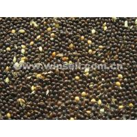 Buy cheap Cereals, Seeds, OilBlack broomcorn millet from wholesalers
