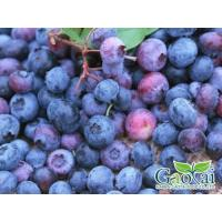 IQF Fruits blueberry