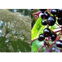 Buy cheap Hot Products Elderberry Extract ,(Berry)Elderberry Extract (Flower, Leaf, Root) from wholesalers