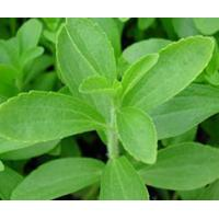 Buy cheap Standardized Extract Stevia Leaf Extract from wholesalers