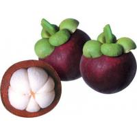 Buy cheap plant extract Mangosteen P.E. product