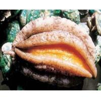 Buy cheap WrinkleAbalone product