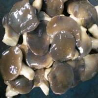 Buy cheap oyster mushroom in brine from wholesalers